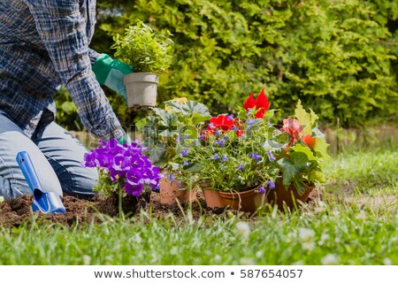 garden planter and trowel Stock photo © sirylok