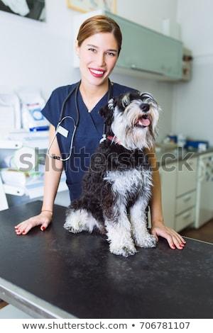 Zdjęcia stock: Smiling Vet Holding A Puppy