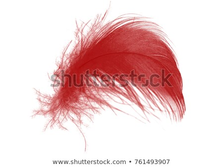 Luxury red plume Stock photo © alphaspirit