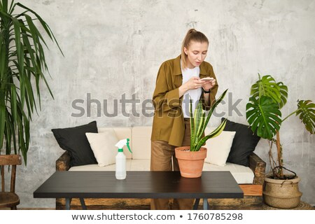 Woman florist taking care of plant in flowerpot Stock photo © deandrobot