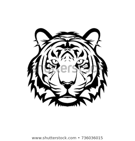 Head of the tigers Stock photo © bluering