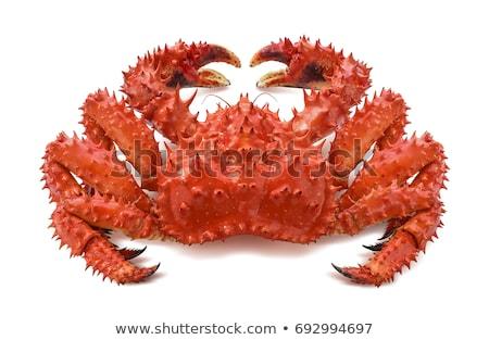 Red king crab isolated on white background Stock photo © nasonov