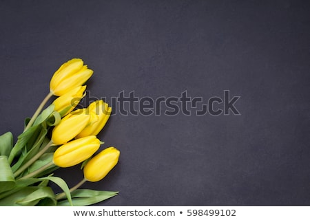 黄色 チューリップ 木製 することができます 中古 花 ストックフォト © Valeriy
