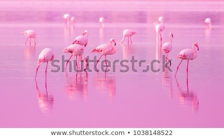 pink flamingos at sunset stock photo © adrenalina