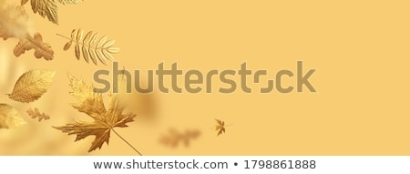 altın · yaprakları · dekoratif · düğün · dizayn · yaprak - stok fotoğraf © blackmoon979