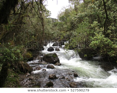 wild creek in rain forest in the island of Galapagos Stock photo © meinzahn