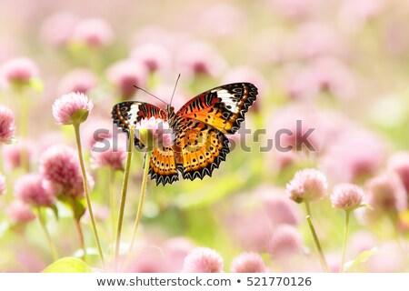 pillangó · narancs · virág · festmény · hatás · virágok - stock fotó © ankarb