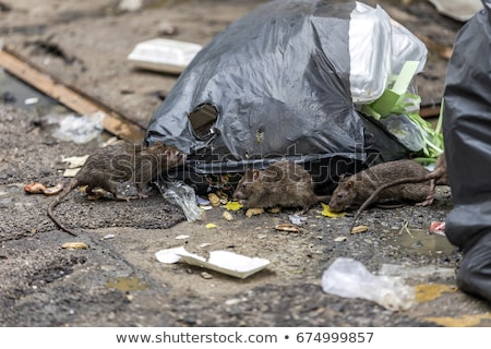 Garbage bag on wet floor Stock photo © bluering