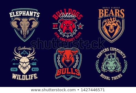 set of the tiger heads sport team mascot design element for lo stock photo © masay256