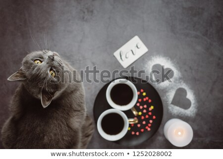 two cats laying on table stock photo © compuinfoto