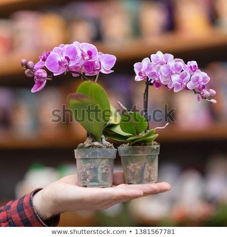 Piccolo orchidea bella verniciato grafica stile Foto d'archivio © frescomovie