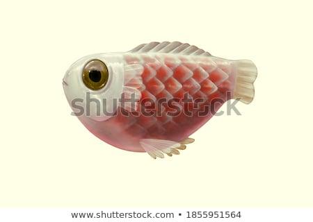 Surrealista peces arte corte dos piezas Foto stock © Lightsource