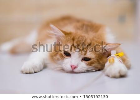 Portré macska operáció asztal állatorvos iroda Stock fotó © wavebreak_media