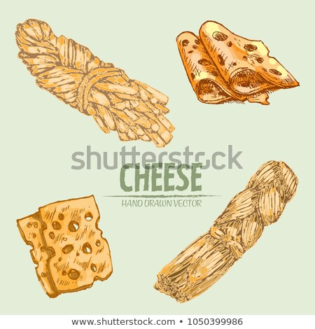 Digital vector detailed line art cheese braid stock photo © frimufilms