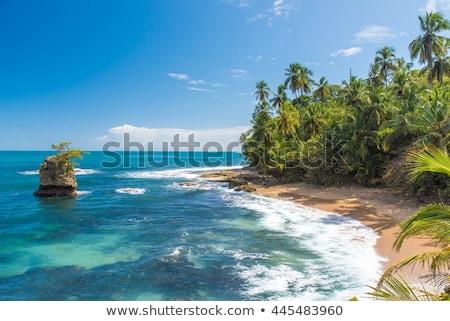 Rocky beach and trees Costa Rica Stock photo © Juhku