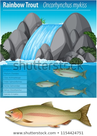 Rainbow trout information poster Stock photo © bluering