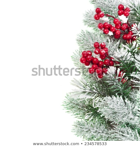 Natürlichen Winter flora Grenze Weihnachten Schnee Stock foto © marilyna