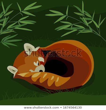Rajz piros panda alszik illusztráció Stock fotó © cthoman
