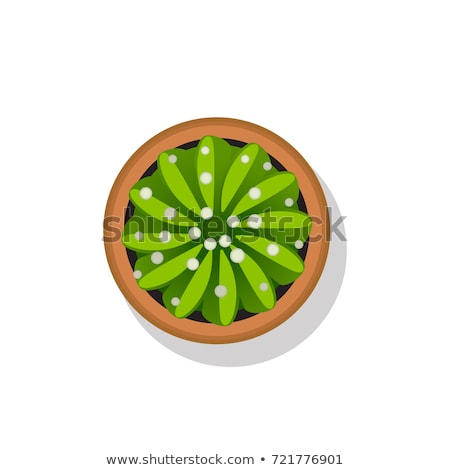 Cactus with Flower on Top Vector Illustration Stock photo © robuart