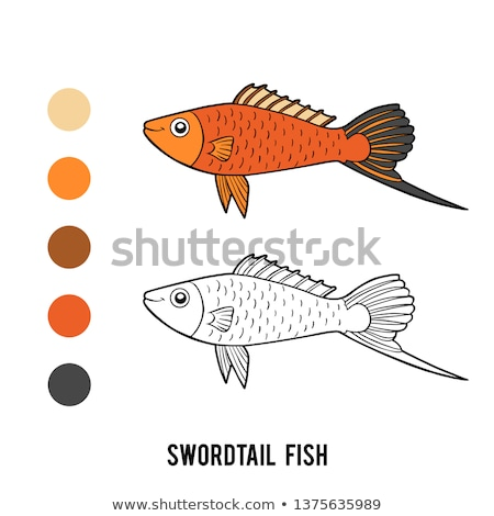 Colorful Swordtail Fish Color Vector Illustration Stock photo © robuart