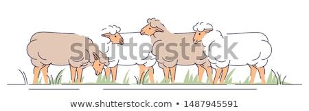 Karikatür koyun yeme örnek gıda kanatlar Stok fotoğraf © cthoman
