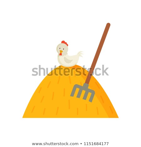 干し草の山 白 めんどり 先頭 鶏 ストックフォト © robuart