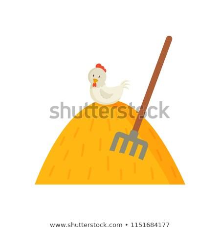 Kuru ot yığını beyaz tavuk üst tavuk Stok fotoğraf © robuart