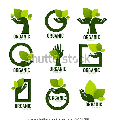 エコ バイオ 葉 自然 ハーブ 健康 ストックフォト © blaskorizov