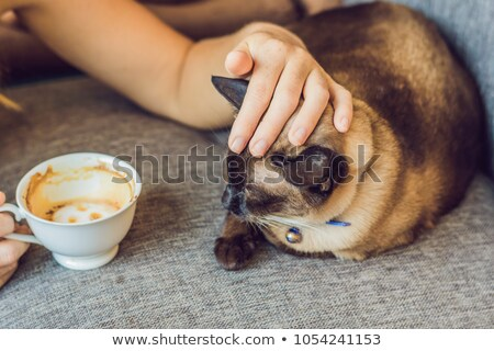 Foto stock: Young Woman Is Drinking Coffee And Stroking The Cat Against The Backdrop Of The Sofa Scratched By Ca