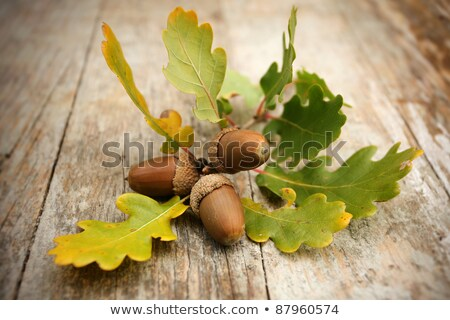 Autumn Oak Leaves And Acorns On Wooden Table Stock photo © ThreeArt