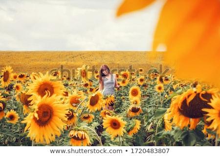 mooie · dame · lopen · zonnebloem · veld · bloem - stockfoto © ElenaBatkova