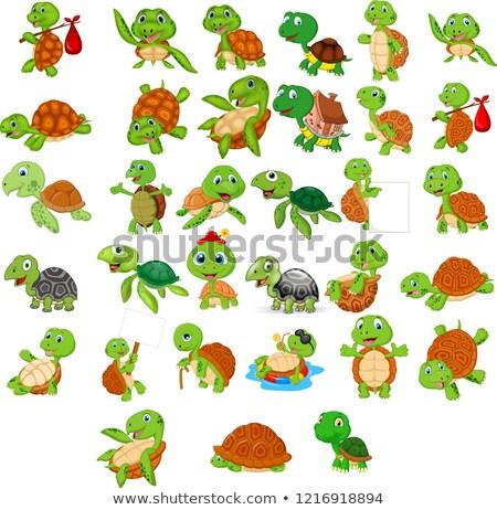 csoport · teknős · természet · illusztráció · fa · boldog - stock fotó © colematt