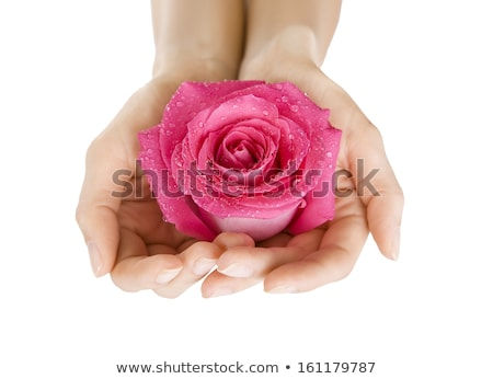 Beauty delicate hands with manicure holding flower rose isolated Stock photo © serdechny