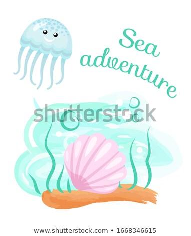 Tenger kaland meduza kagyló fenék vektor Stock fotó © robuart