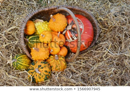 Rustic basket of small warted gourds with a turban gourd  Stock photo © sarahdoow