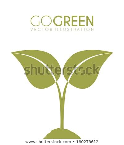 ekoloji · simgeler · çevre · bahar · doğa · yaprak - stok fotoğraf © cidepix