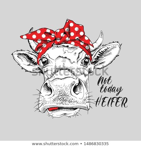 Heifer stock photo © Clivia