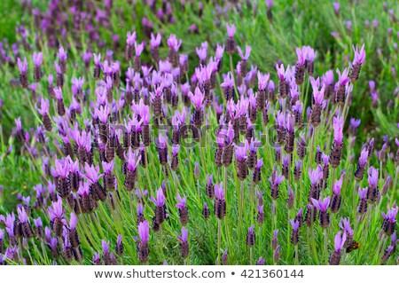 Spaans bloemen tuin detail Spanje kleurrijk Stockfoto © lunamarina