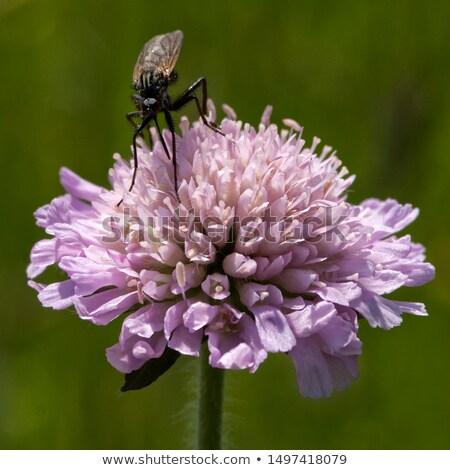 piros · lóhere · virág · közelkép · virágzó · absztrakt - stock fotó © lianem