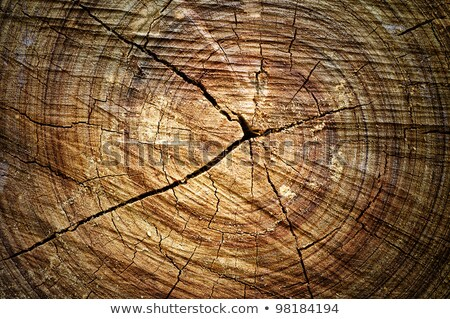 Foto stock: Abstract Crack Wood Ancient Spiral Style