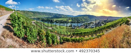 mosel river with vineyard stock photo © hofmeester