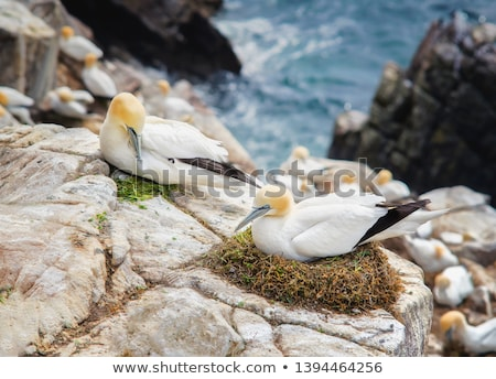 Kuzey doğa deniz okyanus kuş beyaz Stok fotoğraf © dirkr