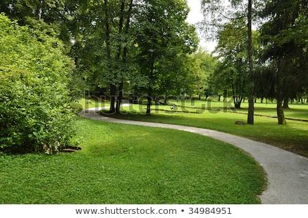 yol · park · doğa · yaprak · bahçe · güzellik - stok fotoğraf © Witthaya