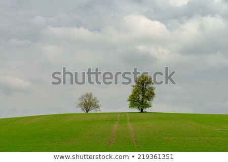 Vanishing Tree 2 Stock photo © chrisbradshaw