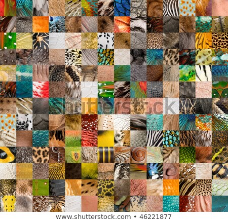 animal skin fur and feathers collage stock photo © saddako2