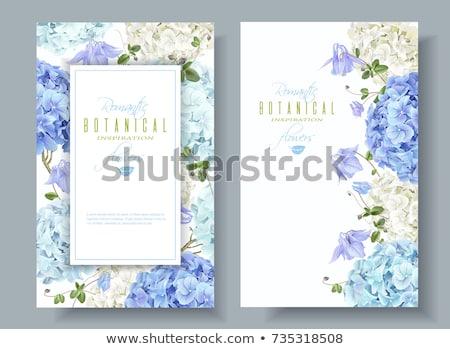 spring flowers on a blue background stock photo © kotenko