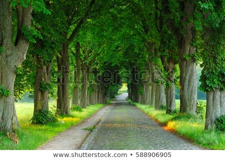 Châtaigne parc allée jeunes arbres automne Photo stock © hraska