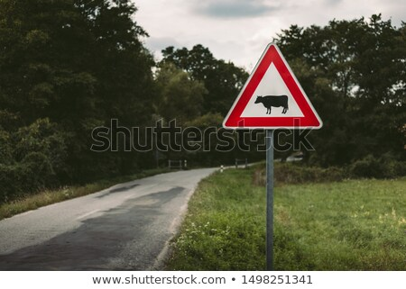European traffic sign, cows on the road Stock photo © lunamarina