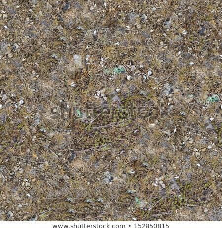 seamless texture of rocky steppe soil stock photo © tashatuvango
