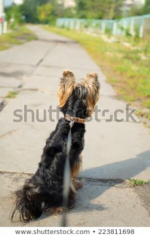 Pequeño obediencia formación aprendizaje tentador par Foto stock © fantasticrabbit